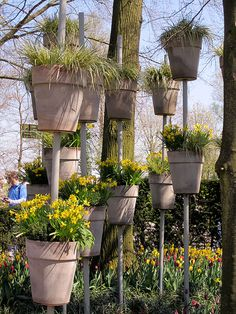 Another great way to add height to your garden! Imagine an entire wall of these!