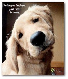 love pups!