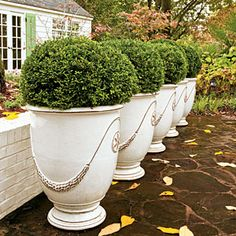 Best Ideas for Fall Container Gardening   Easy Inviting Boxwoods   SouthernLiving.comA pretty row of boxwoods stands at attention, ready to lead guests to the door. Perfect for pots, boxwoods look good all year long and are the nearest thing to no maintenance.