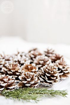 Paint some pine cones white, a nice simple christmas decoration - and/or when the paint is nearly dry add a bit of white sprinkle of white glitter on the edge of the cones - think it would look lovely too  :)