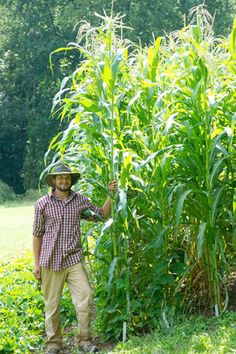 Try Puhwem 'Mother Corn,' a revered Native American corn variety. Our latest MotherEarthNews.com blog by Garden Editor Shelley Stonebrook discusses this fascinating corn, one of the tallest Native American corns known. A huge plus? Its height makes it racoono-proof!