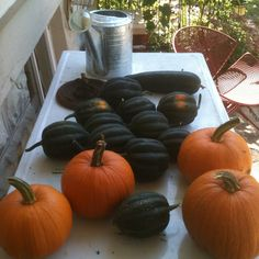 From Plant to Plate - Pumpkin Pie