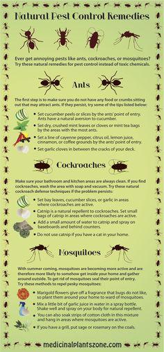 Natural Pest Control Remedies