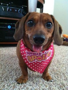 Most doxies are :)