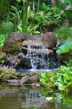 Ponds waterfalls on pinterest ponds garden ponds and for Koi pool water gardens thornton
