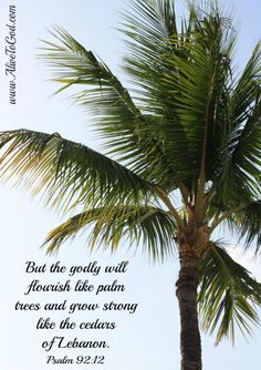 Bible quotes on pinterest bible quotes prayer and bible for Prayer palm plant