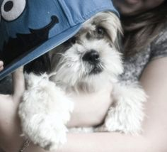 Cookie Monster #pets #dogs