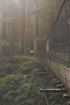 Forest Bridge, Japan