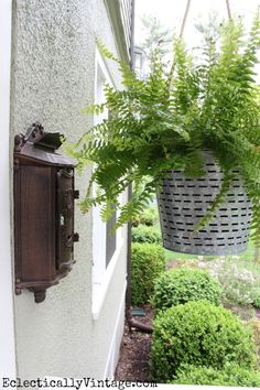 Hanging porch ferns in olive bucket planters - one of the many unique planter ideas on this site! eclecticallyvintage.com