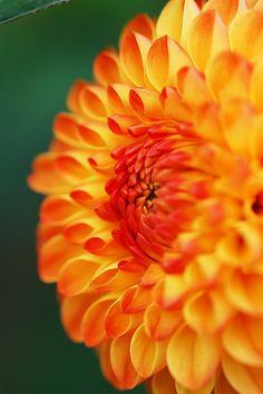Herbstschmuck / Fall jewel
