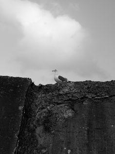函館のかもめ a seagull in Hakodate, Hokkaido, Japan #bird