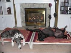 Great Dane On Pinterest Dog Beds Great Danes And Beds