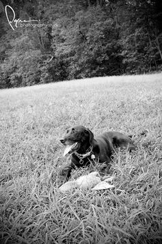 Pet Photography - Lake