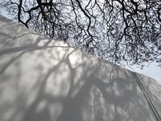 TREES | Patternity