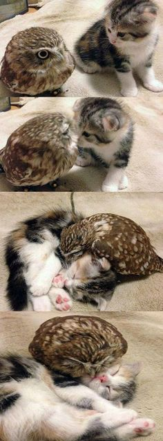 Friends - so darn heart tugging , adorable!