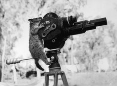 A possum and a movie camera 1943.
