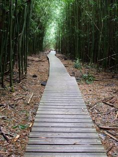 Anyone ever hike through the bamboo forest in the Kipahulu area of Haleakala Nat'l Park (#Maui)? #Hawaii #travel