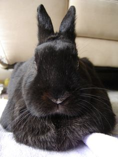 RT @Bunny Buddhism: The wise bunny knows freedom from attachment and aversion is not the same as indifference.
