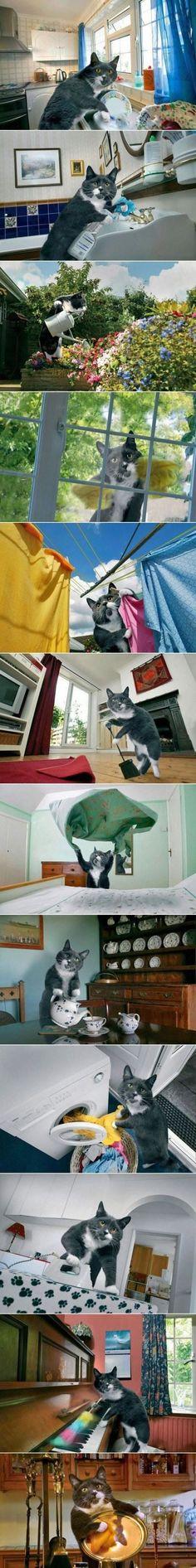 I need this cat :p