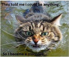 Crocodile Cat!