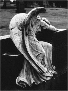 weeping angel ...