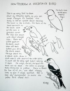 Read How To Draw a Bird Easy Lesson and Worksheet at the blog: http://drawinglessonsfortheyoungartist.blogspot.com/2012/11/how-to-draw-bird-easy-lesson-and.html#