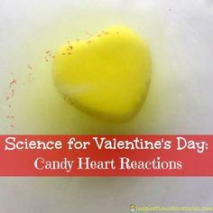Candy Science: Conversation Heart Reactions - a simple science experiment for Valentine's Day candi heart, valentine day, home baking, candies, inspir laboratori, heart reaction, valentin candi, candi scienc, kid