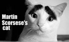 Martin Scorsese's cat, Kitty Scorsese.