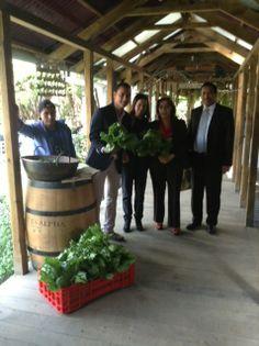 Tiempo de cosecha en L'Osteria de Saúl. La cosecha fue compartida con nuestros visitantes, quienes al igual que nosotros, comparten su entusiasmo por la conservación de un ambiente sano y renovable.