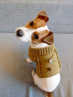 if i know how to knit, i'll knit this for my jack russell too