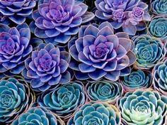 Gorgeous colors, gorgeous photo.