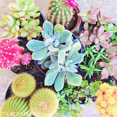 beautiful + bright succulents via The Blissful Bee