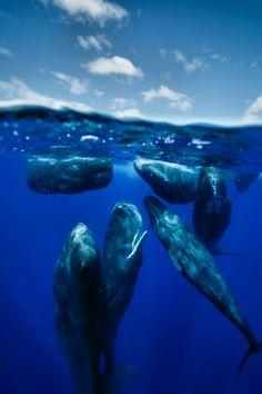 ♀ Underwater blue
