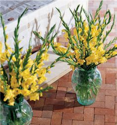 Yellow gladiolus vase arrangements