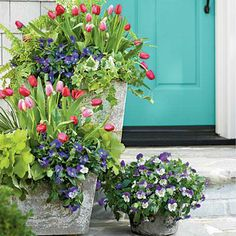 Tulips, Pansies, Acorus, Heuchera, Ivy and Fern | Pair your tulips with Lavender Blue' and 'Purple Wing' Plentifall pansies, acorus, heuchera, variegated ivy, and 'Tiger' fern (a selection of Boston fern). | SouthernLiving.com colorful flowers, the doors, garden ideas, potted plants, door colors, tulip, front doors, gardens, flower pots