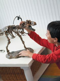3' Ultimate T-Rex Skeleton Model by Discovery Toys on Gilt.com