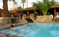 The saltwater #pool at The Sparrows in Palm Springs, California, is a great hangout space - even for #dogs!