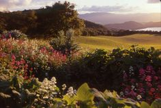 Napa Wineries With the Best Views   7x7