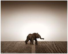Nursery Decor, Baby animal art, Baby room ideas, Safari animals, Baby Elephant One Photo Print