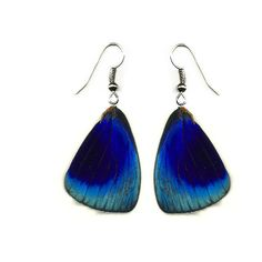 "Free Shipping Worldwide Real Butterfly wing Earrings ""Callithea... ($12) ❤ liked on Polyvore"