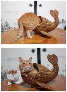 Poisson chat. Catfish. Brillant !