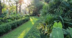 Tropical and formal. The garden of Alejandro Gonzales and Jim Smeal in Charleston, South Carolina.
