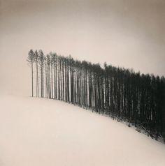 Forest Edge, Hokuto, Hokkaido, Japan  photo by Michael Kenna, 2004