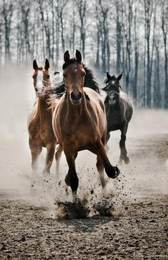 This is how my horses would react when I called them in from the pasture. I wish I'd had the presence of mind to snap a pic of it.