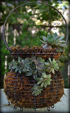 The Lavender Tub: hen and chicks succulent basket