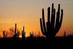 Sonoran desert.