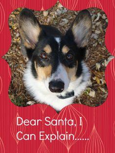 The Corgis' Christmas Wish List