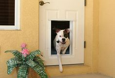 doorinset doggi, pet door, doggi door