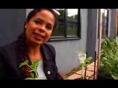 Garden Girl TV: Cucumbers