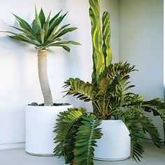 Cool container gardens | One-plant pots | Sunset.com